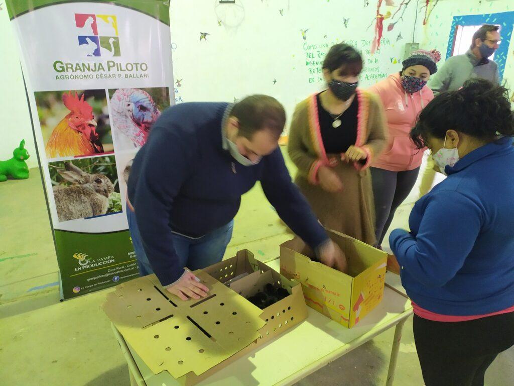 Santarroseños reciben gallinas ponedoras al igual que en Carro Quemado, Loventuel y Victorica.